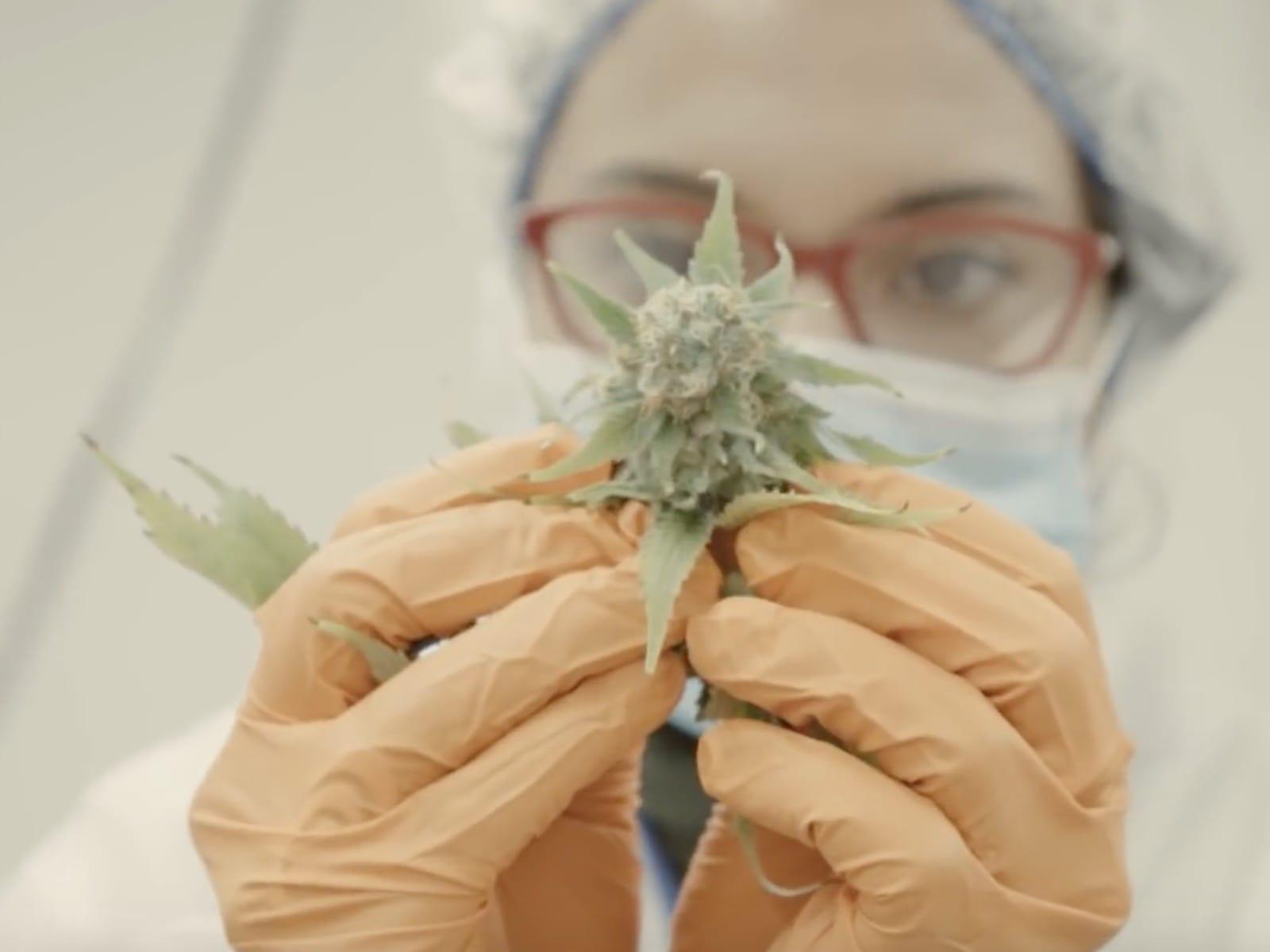 Cannabis Video 12-7-19