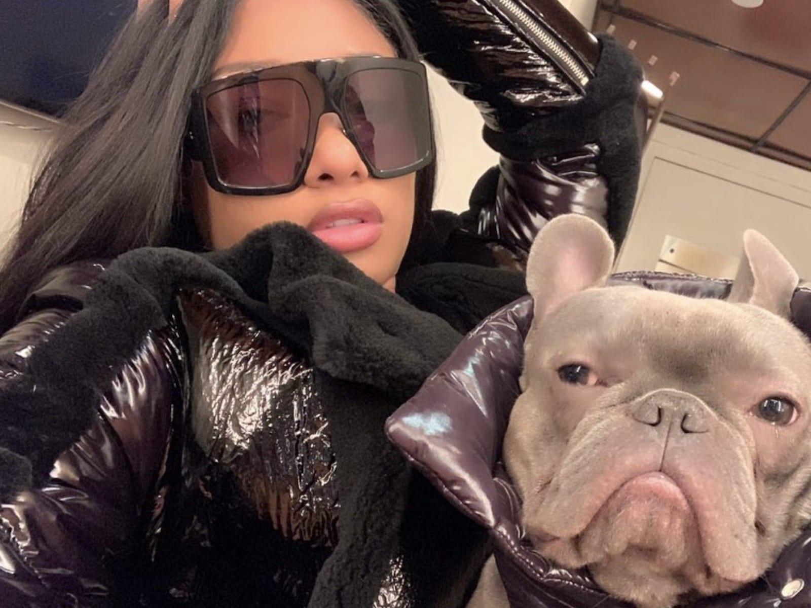 Megan Thee Stallion Frenchie Dog Selfie